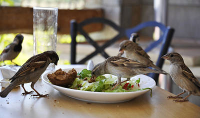 Photograph - Lunch by Dubi Roman