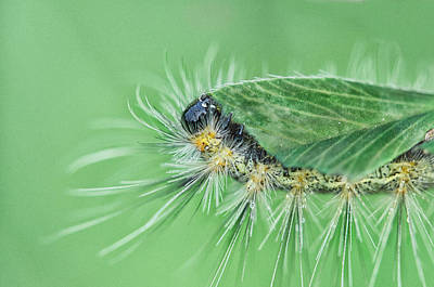 Caterpillar Wall Art - Photograph - Lunch Is On Me by Susan Capuano