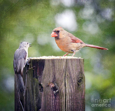 Tufted Titmouse Photograph - Lunchtime Conversations  by Kerri Farley