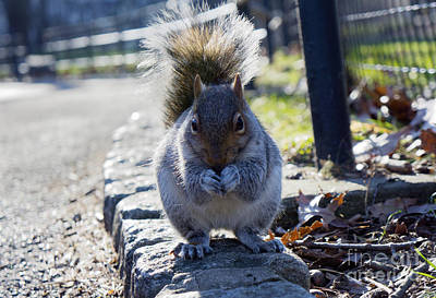Lunchtime For Central Park Squirrel Art Print by Rafael Quirindongo