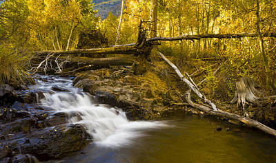 Photograph - Lundy Canyon Cascade by Joe Doherty