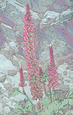 Photograph - Lupine 1-1 by Andy Shomock