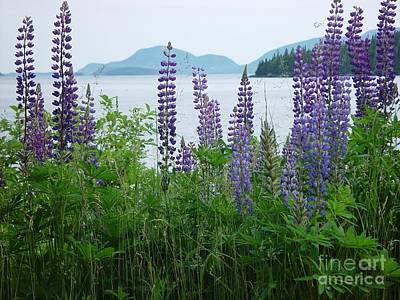Art Print featuring the photograph Lupine At Sorrento by Christopher Mace