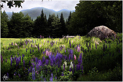 Photograph - Lupine In The Shadow Of Cannon by Wayne King