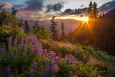 North Cascades Photograph - Lupine Meadows Sunstar by Mike Reid