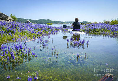 Photograph - Lupine Paddling Fantasy by Cheryl Wood