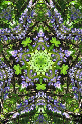 Pentagram Photograph - Lupine Pentagram by Barbie Wagner