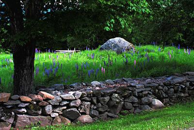 Photograph - Lupine Wall by Wayne King