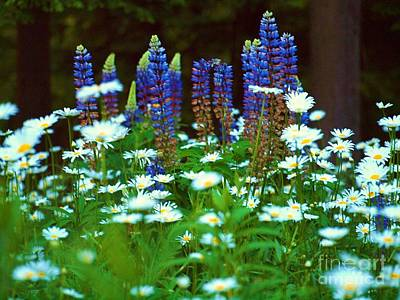 Photograph - Lupines And Daisies by Tammy Bullard