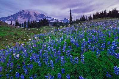 Photograph - Lupines Dawn by Gene Garnace