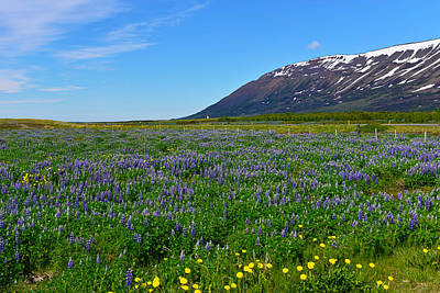 Hofsos Photograph - Lupins And Mountains Around Hofsos by Jeffrey Hamilton