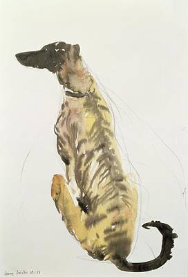Lurcher Sitting Art Print by Lucy Willis