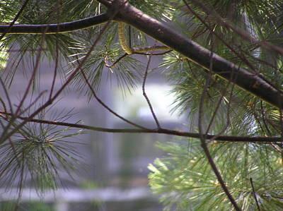 Lurking Pine Original by Marisa Horn
