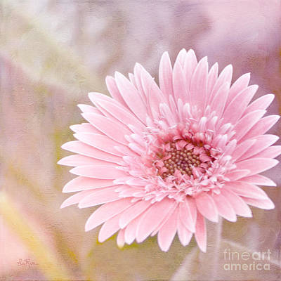 Gerbera Daisy Digital Art - Luscious by Betty LaRue
