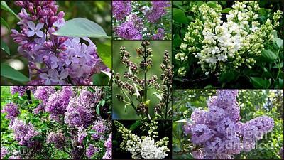 Photograph - Luscious Lilacs  by Eunice Miller