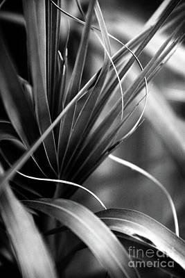 Photograph - Luscious Lines by Ellen Cotton