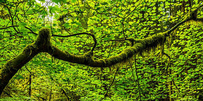 Branch Wall Art - Photograph - Lush by Chad Dutson
