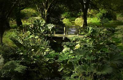 Photograph - Lush Garden At Blarney Castle by Nadalyn Larsen