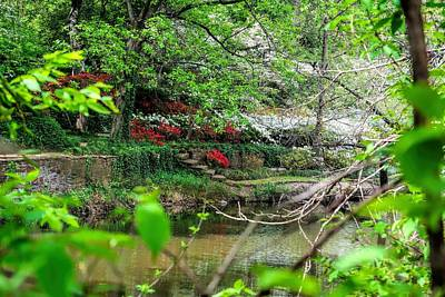 Photograph - Lush Garden In Turtle Creek by Diana Mary Sharpton