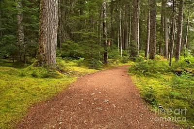 Photograph - Lush Green Forest At Cheakamus by Adam Jewell