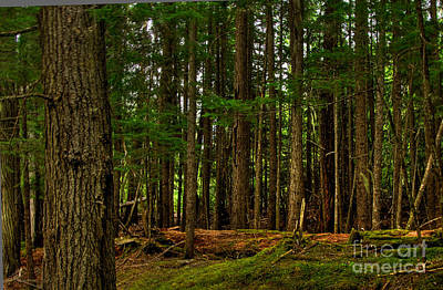 Photograph - Lush Green Forest by Sam Rosen