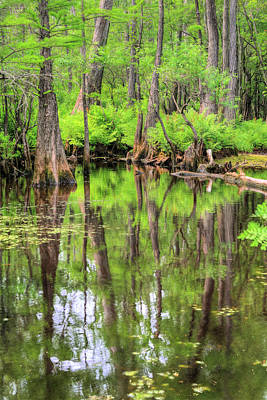 Cypress Knees Photograph - Lush by JC Findley