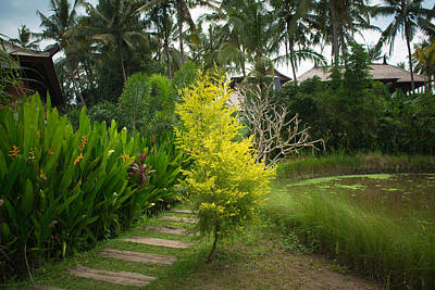 Little Mosters - Lush tropical garden by Nikita Buida