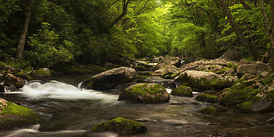 Spring Scenery Photograph - Lush Woods At Spring by Andrew Soundarajan