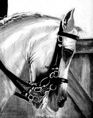 Lusitano Horse Portrait Art Print by Olde Time  Mercantile