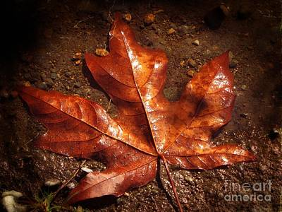 Photograph - Lustrous Maple by Tikvah's Hope