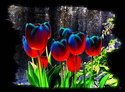 Photograph - Lustrous Tulips by Will Borden