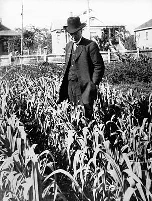Santa Rosa Photograph - Luther Burbank In His Garden by Underwood Archives