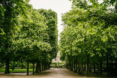 Luxembourg Park Trees Art Print