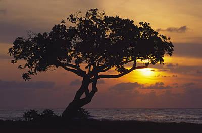 Photograph - Lydgate Sunrise by Morris  McClung