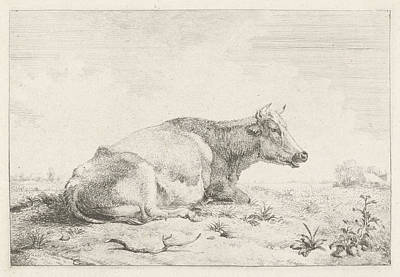 Thistle Drawing - Lying Cow And Thistle, Pieter Gerardus Van Os by Artokoloro