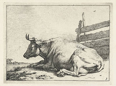 Fence Drawing - Lying Cow Near A Fence, Paulus Potter by Paulus Potter