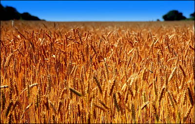 Bread Making Photograph - Lying In The Rye by Karen Wiles