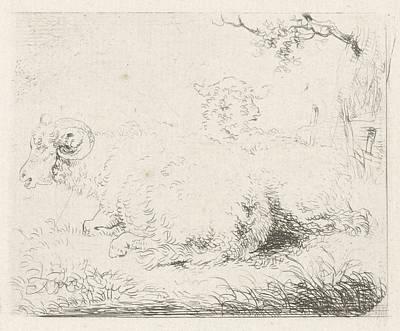 Ram Sheep Drawing - Lying Sheep And Ram, Pieter Gerardus Van Os by Artokoloro