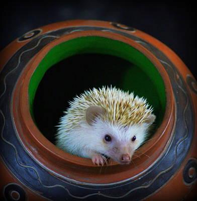 Lyla The Hedgehog Art Print