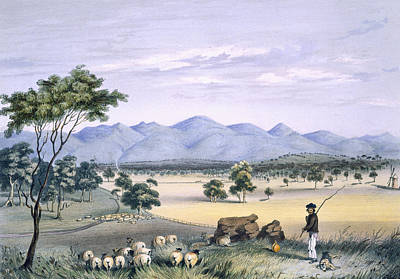 Shepherd Drawing - Lynedoch Valley Looking Towards by George French Angas