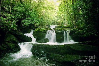 Lynn Camp Cascades Art Print by Teri Brown