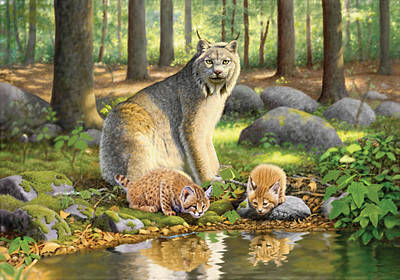 Lynx Photograph - Lynx And Kittens by Chris Heitt