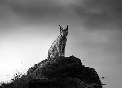 Lynx Wall Art - Photograph - Lynx Drama. by Sergio Saavedra Ruiz