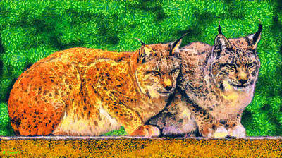 Bobcats Drawing - Lynx by George Rossidis