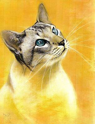 Drawing - Lynx Point Siamese by VLee Watson