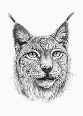 Lynx Portrait Art Print by Iren Faerevaag