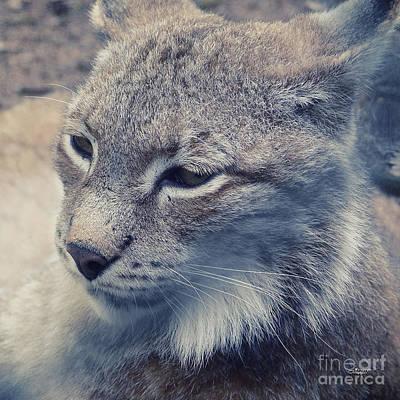 Photograph - Lynx Portrait by Jutta Maria Pusl