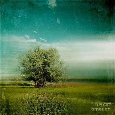 Poetic Photograph - Lyrical Tree - 0109bt01d by Variance Collections