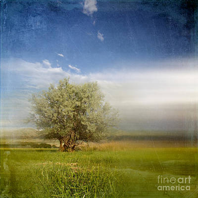 Poetic Photograph - Lyrical Tree - 01bt01aa by Variance Collections