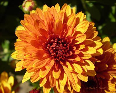 M Bright Orange Flowers Collection No. Bof3 Art Print